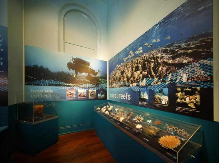 Detail of the Dampier Marine Gallery - before the decant