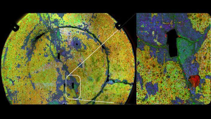 The de Vlamingh dish: X-Ray Map