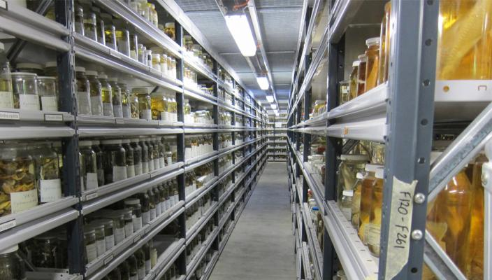 Inside the WA Museum Collections and Research Centre