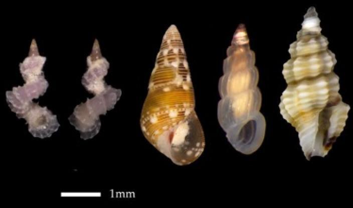 A picture containing animal, invertebrate, micro molluscs