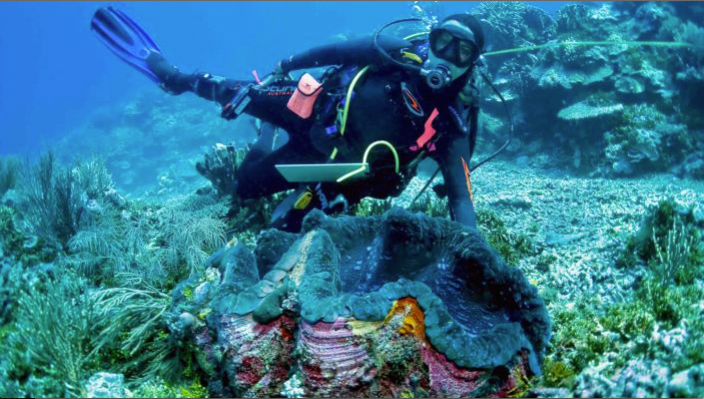 One of several species of Giant Clam, Tridacna gigas, from Ashmore Reef