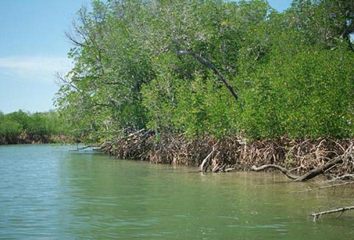 Image of Mangroves of the Dampier Archipelago.