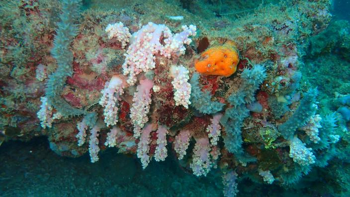 Picture of Soft corals and sponges underwater