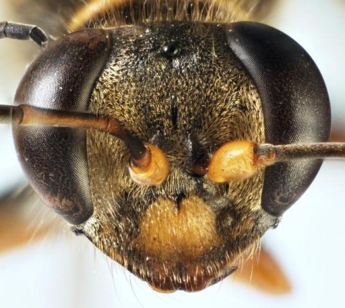 A close up view of a slender mud-dauber wasp