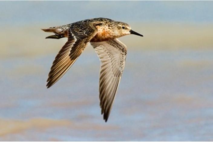 Colourful bird in flight