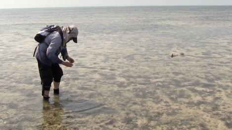 John Huisman with a shark swimming towards him