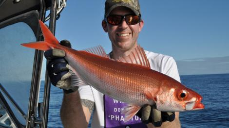 A freshly caught Japanese Rubyfish held by a fisherman