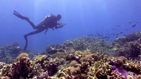 Scuba diver swimming above Kimberley reef