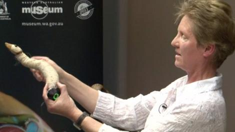 Kirsten Tullis demonstrating taxidermy techniques