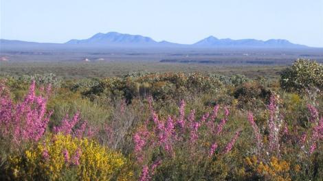 Panorama of wildflowers near Albany