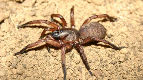 A large spider crawling across the ground