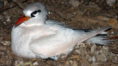 A large white bird roosting on its nest