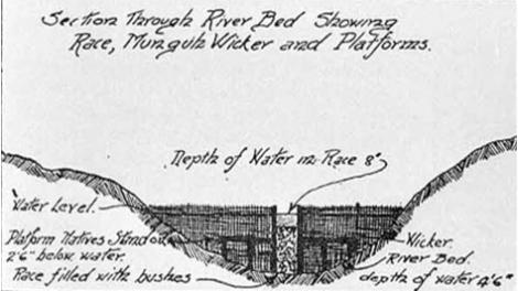 Illustration of an Aboriginal fish trap