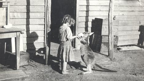 A small girl feeding a kangaroo