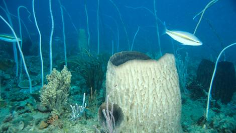 A reef scene with a large circular sponge