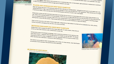 "Screen shot from the ""Marine Life of the Dampier Archipelago"" website"