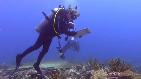 Diver examining Kimberley reef as part of the Woodside Collection Project