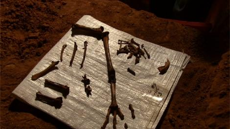 A series of bird fossils spread onto a surface