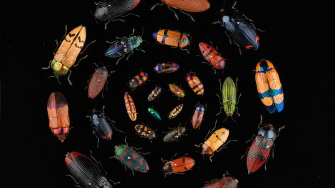 Many beetles of different sizes and colours arranged in circles