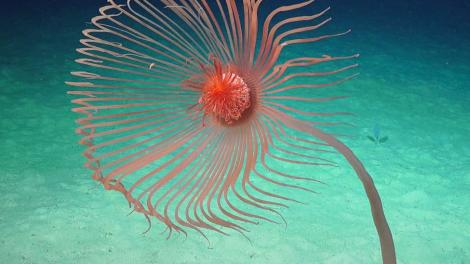 A brightly coloured sea creature in the ocean