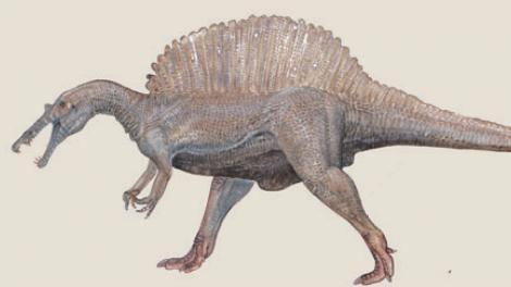 A spinosaurus walking
