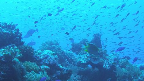 A underwater reef scene with many fish