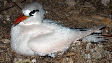 white bird nesting