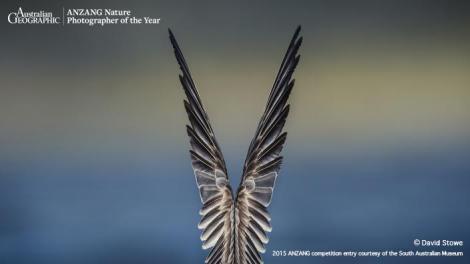 Photograph of bird wings
