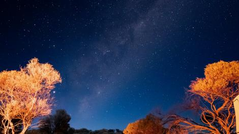 Trees in the outback are lit up beneath a starry night sky