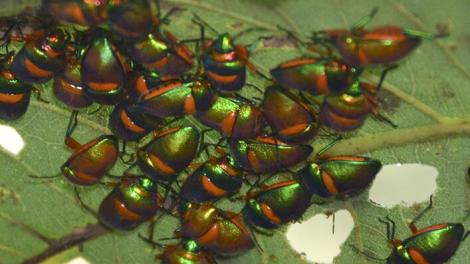 A collection of colourful bugs on a leaf