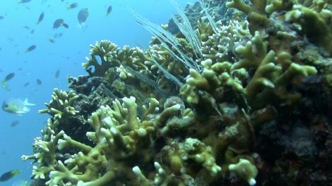 A colour coral reef scene