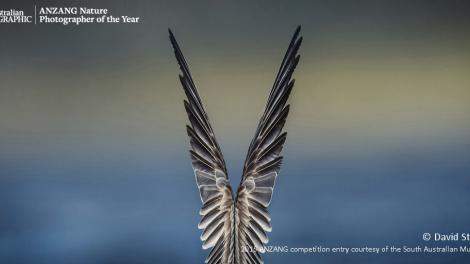 Overall winner 'Feathered Symmetry' by David Stowe shows a bird's wings raised