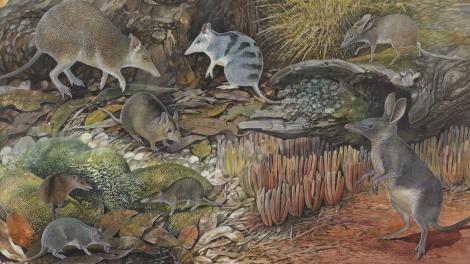Tiny fossils, big story! artwork courtesy Peter Schouten.