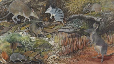 Wildlife illustration by Peter Schouten