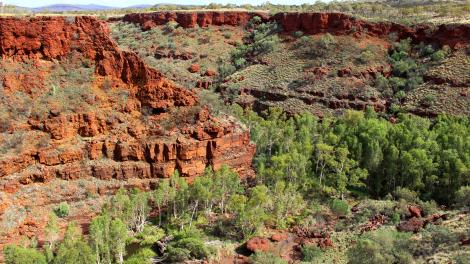 Red gorges with large trees growing at the bottom
