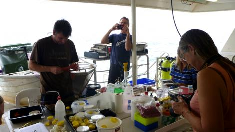 Scientists processing specimens on back of boat