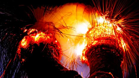 Two grass trees burning at night