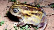 Frog on ground