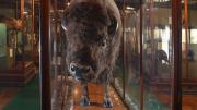 A large mammal
