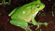Very green individual