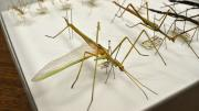 Several stick insects in their storage box
