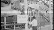 """""""Historic photo of a man standing in front of the Blue Whale skeleton."""""""