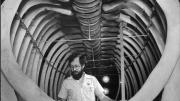 A man stands in the centre of a giant whale's rib cage.