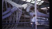 A man stands in front of a large whale skeleton