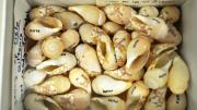 Juvenile baler shells in their storage box