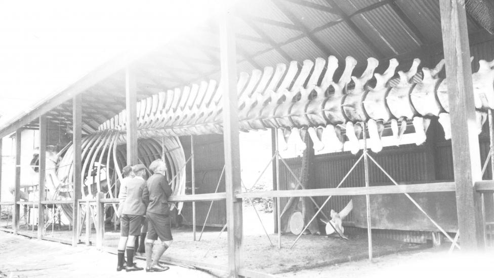 """""""Old b&w photo shows three young men looking at large whale skeleton."""""""