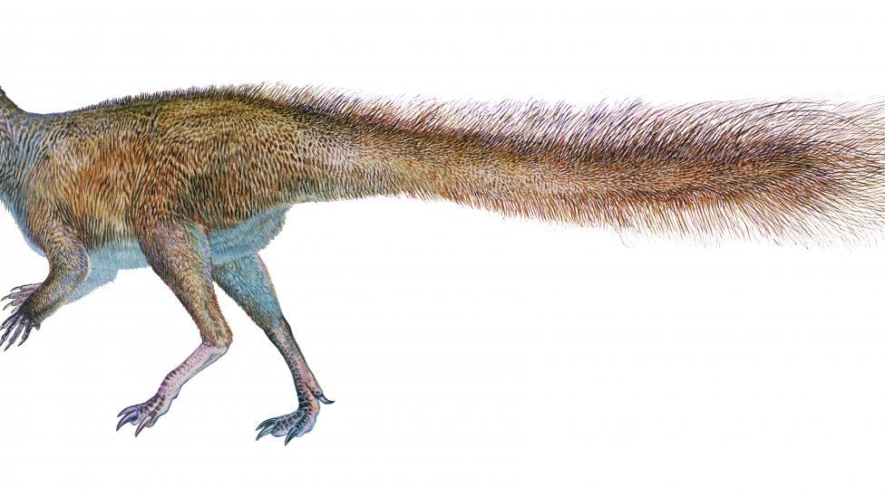 Illustration of a Leaellynasaura