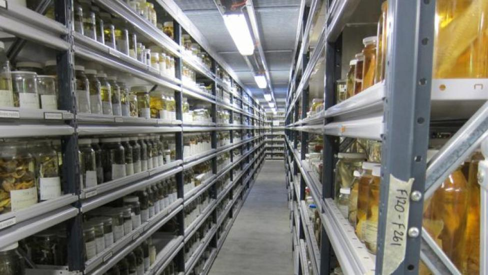 Inside the Collection and Research Centre.