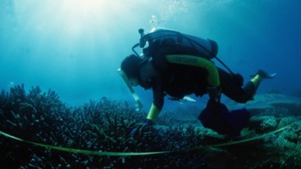Underwater diver Dr Jane Formont