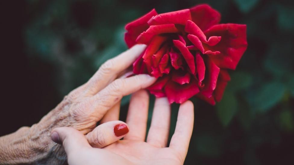 Hands holding each other with a red rose.